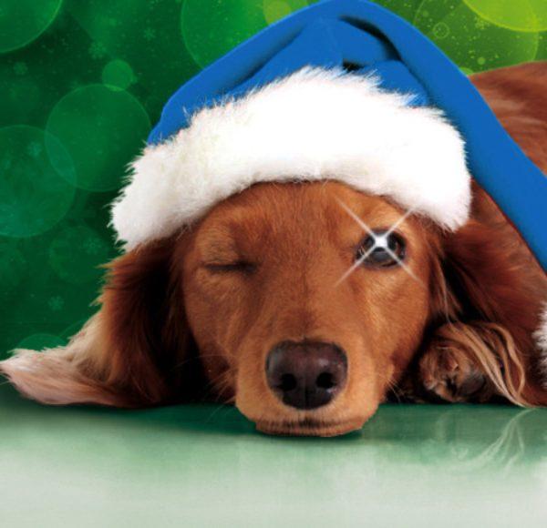 Besinnliche Weihnachten und ein gesundes neues Jahr